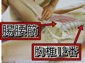腸腰筋は第12胸椎から始まります