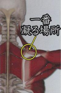 肩甲骨の一番凝る位置