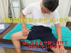 大内転筋や長内転筋などの内転筋群を骨際からはがしていきます