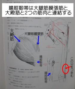大腿筋膜張筋と大殿筋と連結する