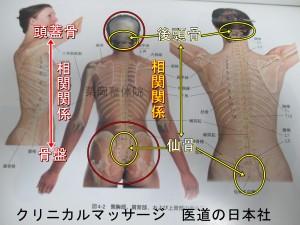 骨盤と頭蓋骨の関係は仙骨と後頭骨の関係につながる