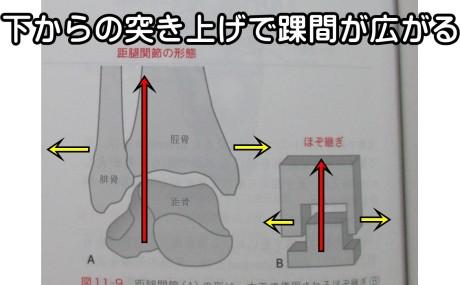 足首は下からの突き上げで踝間がひろがる