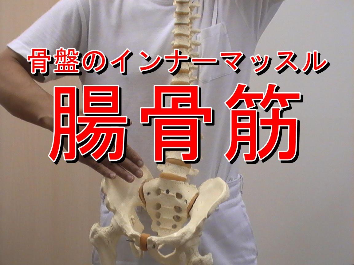 腸骨筋は大腰筋と合流します