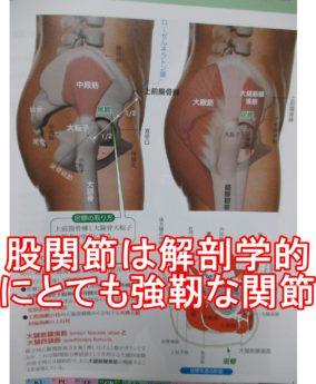 股関節は解剖学的にとても強靭な関節です。