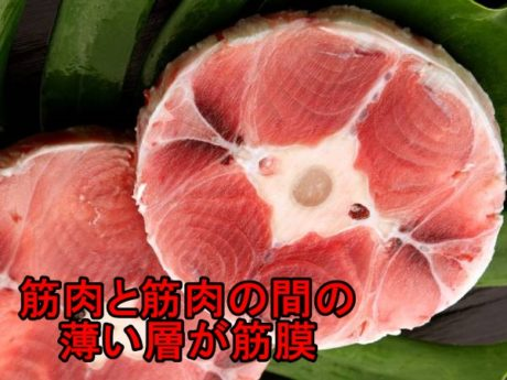 マグロの筋膜
