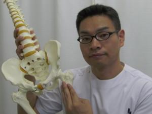 小転子から緩めることもあります大腰筋の停止部小転子骨盤股関節