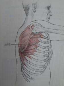 肩甲骨の裏側を走行します