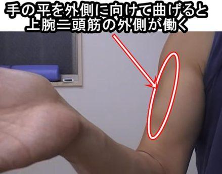 上腕二頭筋の外側