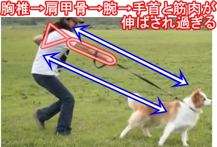 胸椎→肩甲骨→腕→手首と筋肉が伸ばされ過ぎる