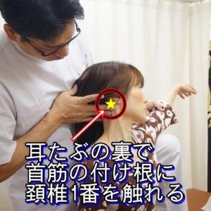 耳たぶの裏首筋の付け根に頚椎一番を触れる
