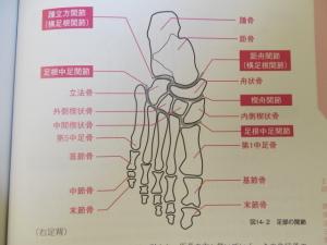 意外多い足の骨