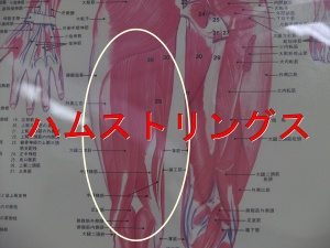 大腿二頭筋と半腱半膜様筋
