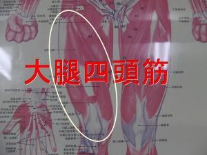 大腿直筋・外側広筋・内側広筋・中間広筋