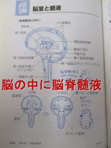 脳室と脳脊髄液