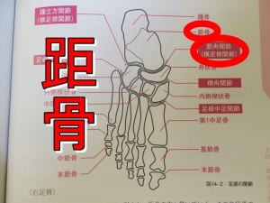 距骨と足関節