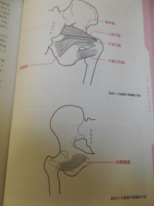 股関節外旋筋
