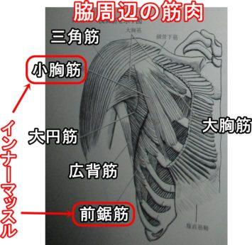 前鋸筋など脇周辺の筋肉