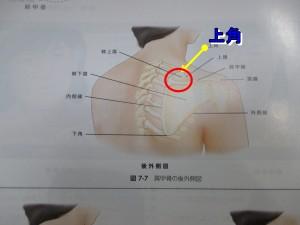 肩甲骨の凝りやすい位置上角