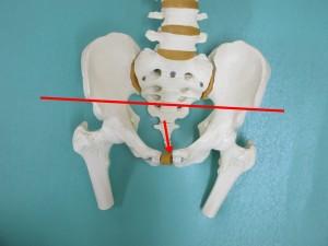 仰向けだと右が高く左が低い。尾骨は左のまま。