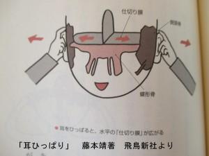 耳ひっぱりで蝶形骨が整うと脳も整う頭蓋骨