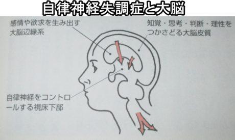 自律神経失調症と大脳