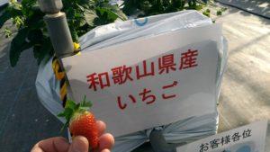 和歌山県産いちご