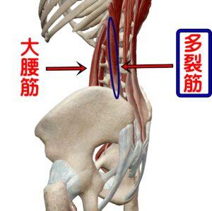 大腰筋と多裂筋インナーマッスル